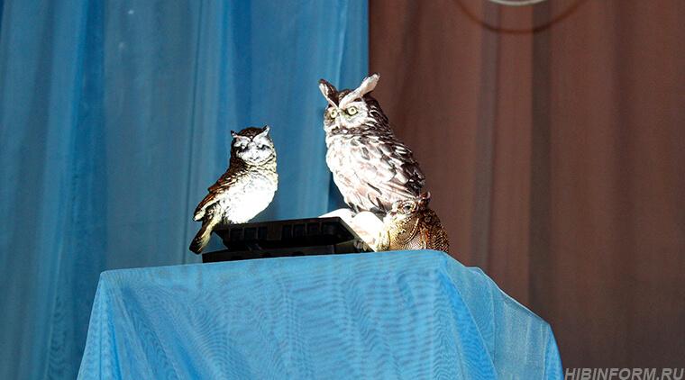 На турнире совы ждали своего часа, ласточки летали, а предметы из «чёрного ящика» пропадали